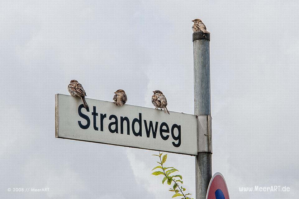 Spatzen auf einem Straßenschild in Travemünde // Foto: MeerART