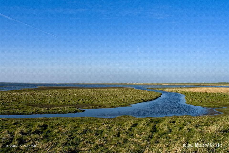 Naturschutzgebiet an der Nordsee // Foto: MeerART