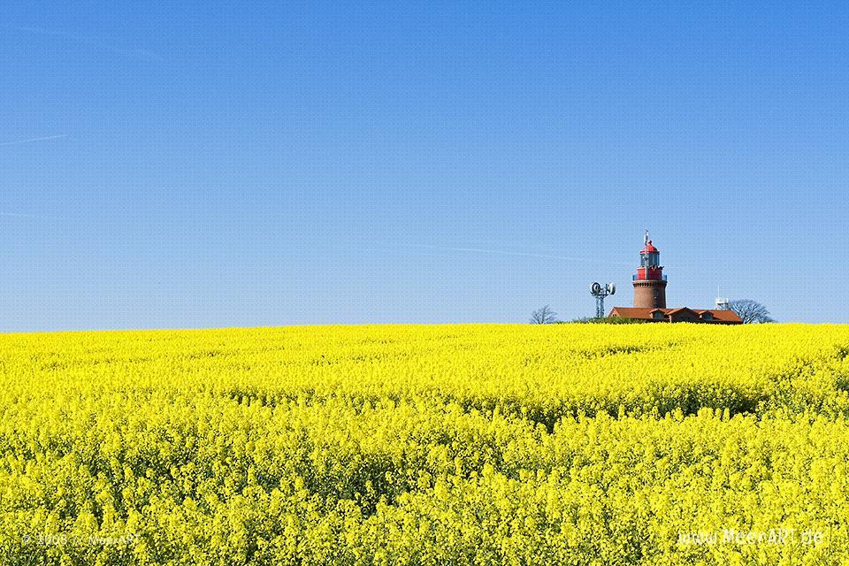 Leuchtturm von Bastorf in einem Rapsfeld // Foto: MeerART
