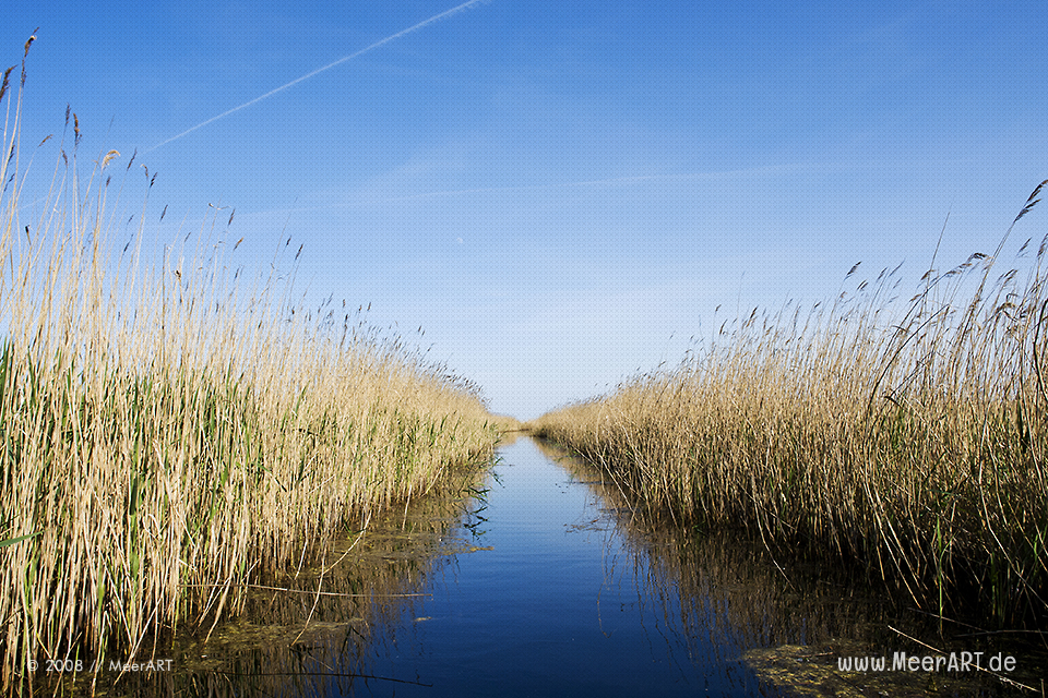 Wasserlauf in einem Naturschutzgebiet in Prerow // Foto: MeerART