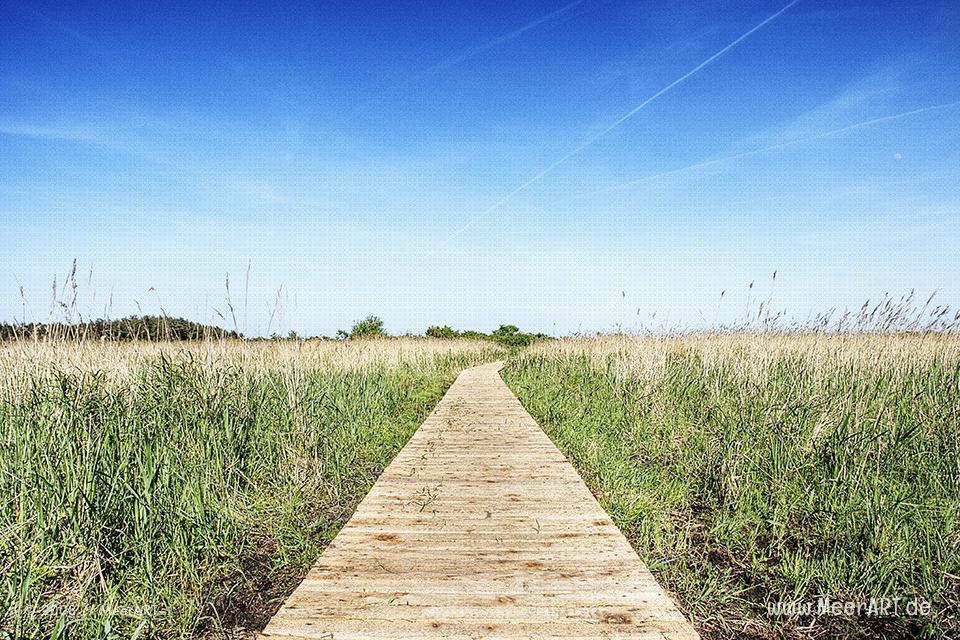 Holzpfad in einem Naturschutzgebiet in Prerow // Foto: MeerART