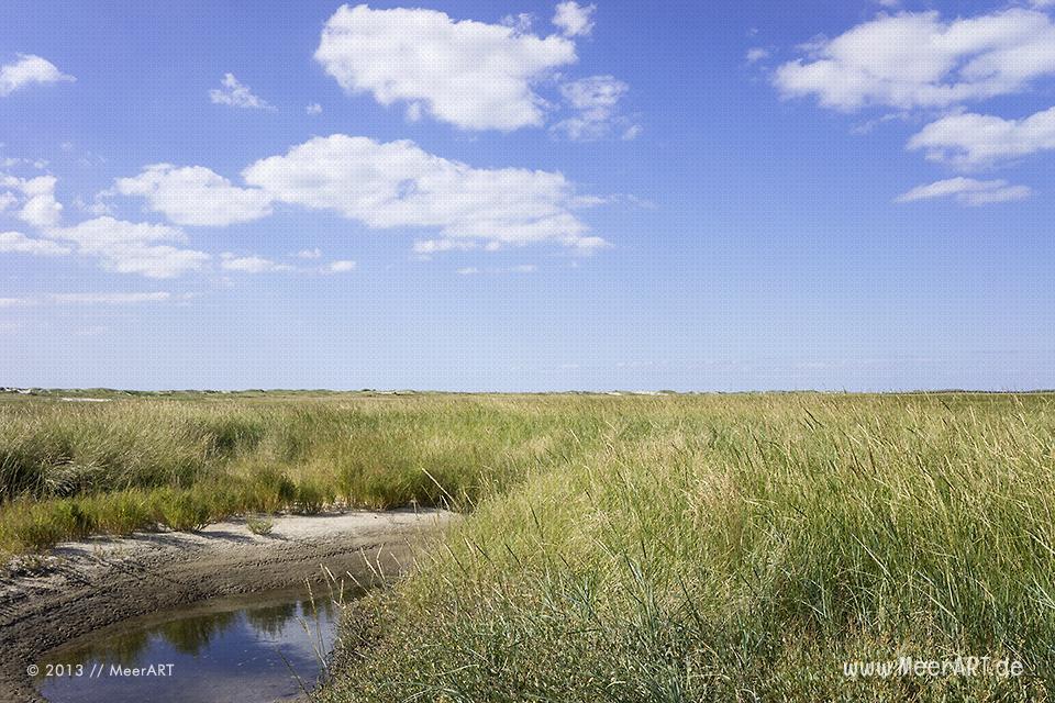 Salzwiesen an der Nordseeküste am Strand von St. Peter-Ording // Foto: MeerART