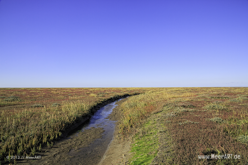 Salzwiesen an der Nordseeküste im Naturpark Wattenmeer vor Westerhever // Foto: MeerART
