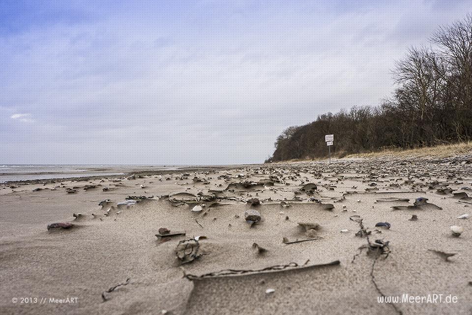 Skurrile Skulpturen am Strand von Groß Schwanensee // Foto: MeerART