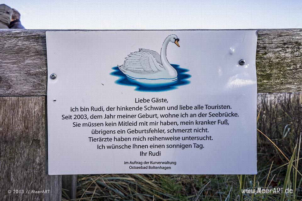 Rudi – der hinkenden Schwan von Boltenhagen // Foto: MeerART