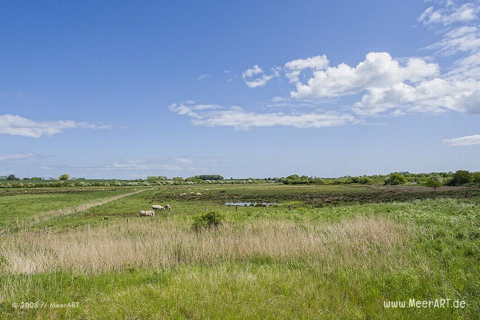 """Das Naturschutzgebiet am Ausgang der Flensburger Förde, die """"Geltinger Birk"""" // Foto: MeerART"""