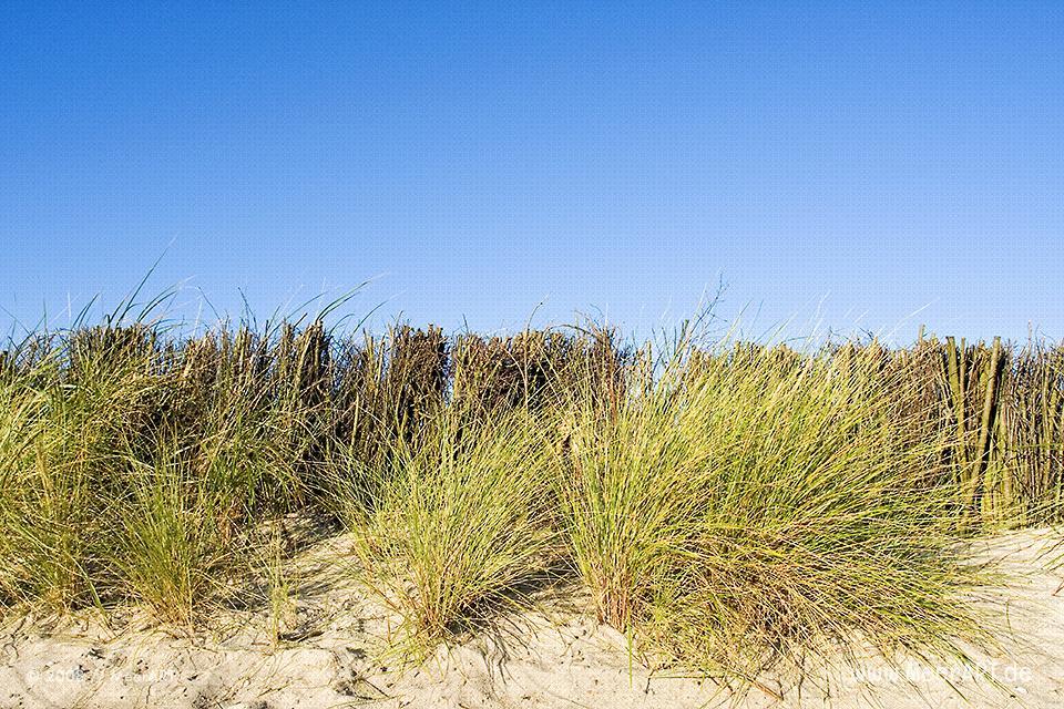 Dünenbefestigung am Sandstrand in Schönberg/Kalifornien // Foto: MeerART
