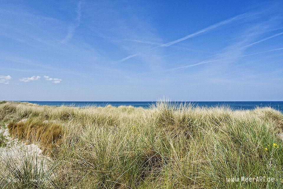 Dünenbefestigung an einem Strandabschnitt auf dem Darss // Foto: MeerART