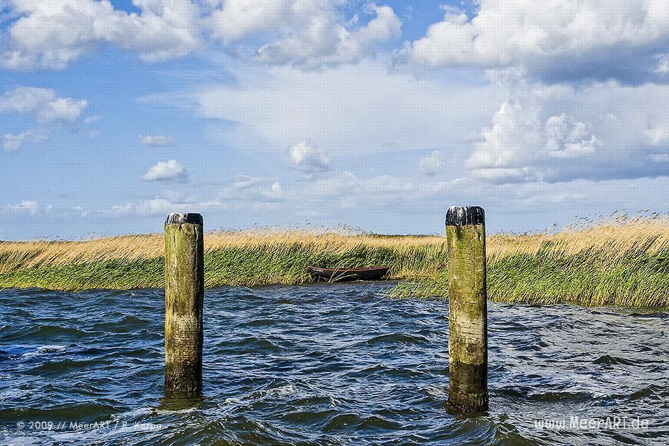 Ruderboot im Schilf // Foto: R. Kerpa