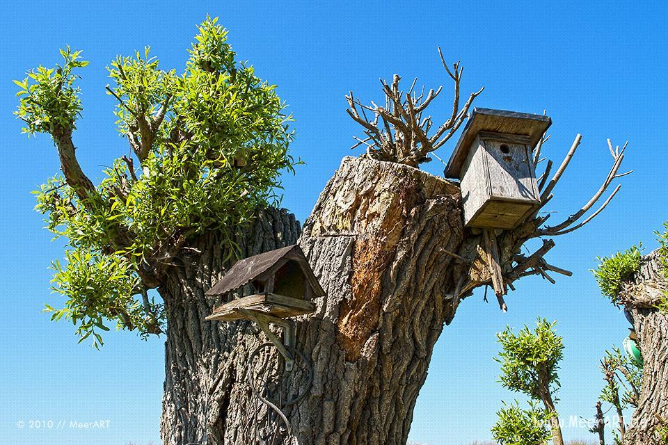 Vogelhaus und Nistkasten an einem Baum // Foto: MeerART