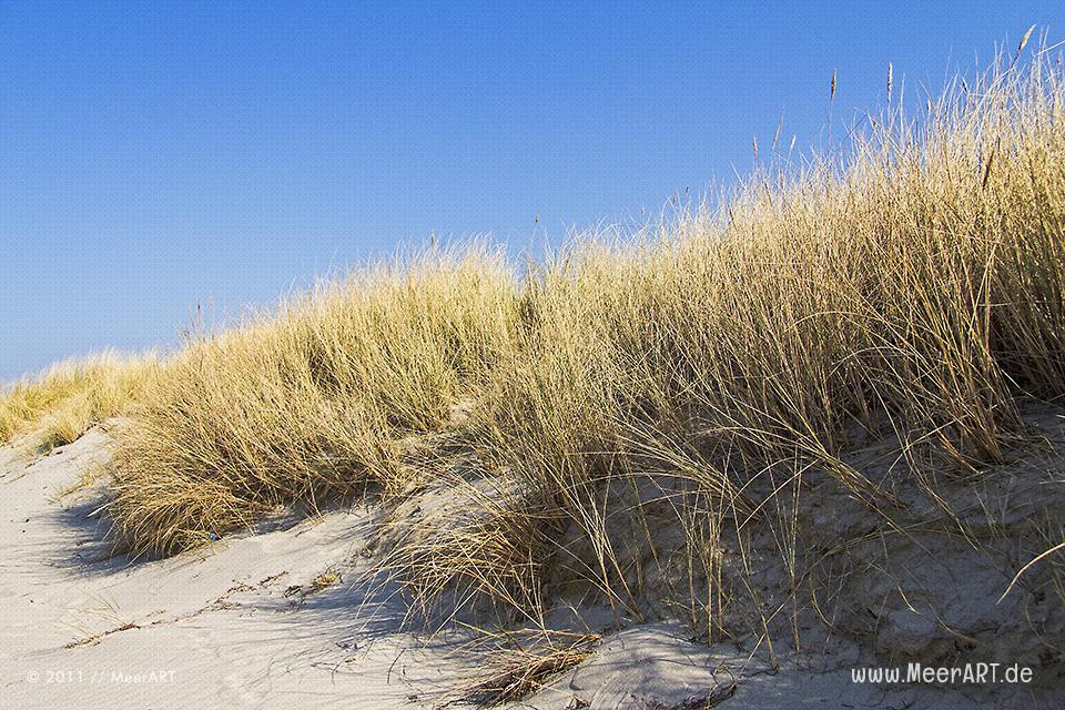 Dünen an einem Strandabschnitt an der Ostsee // Foto: MeerART