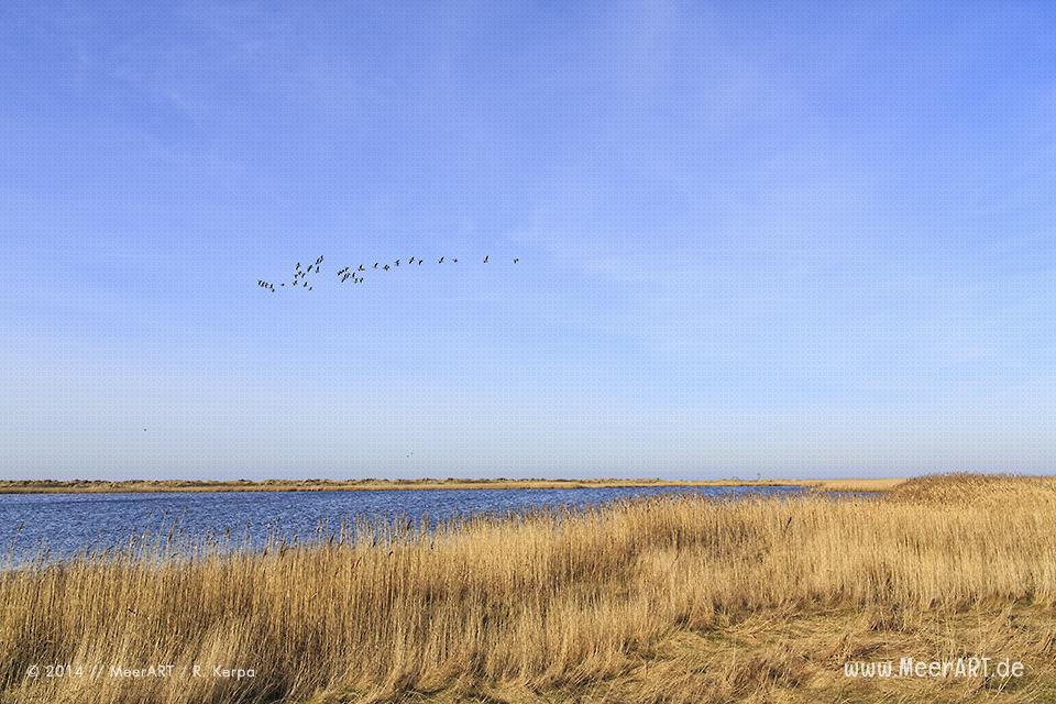 Salzsee im Naturschutzgebiet bei Westermarkelsdorf auf der Ostseeinsel Fehmarn // Foto: R. Kerpa