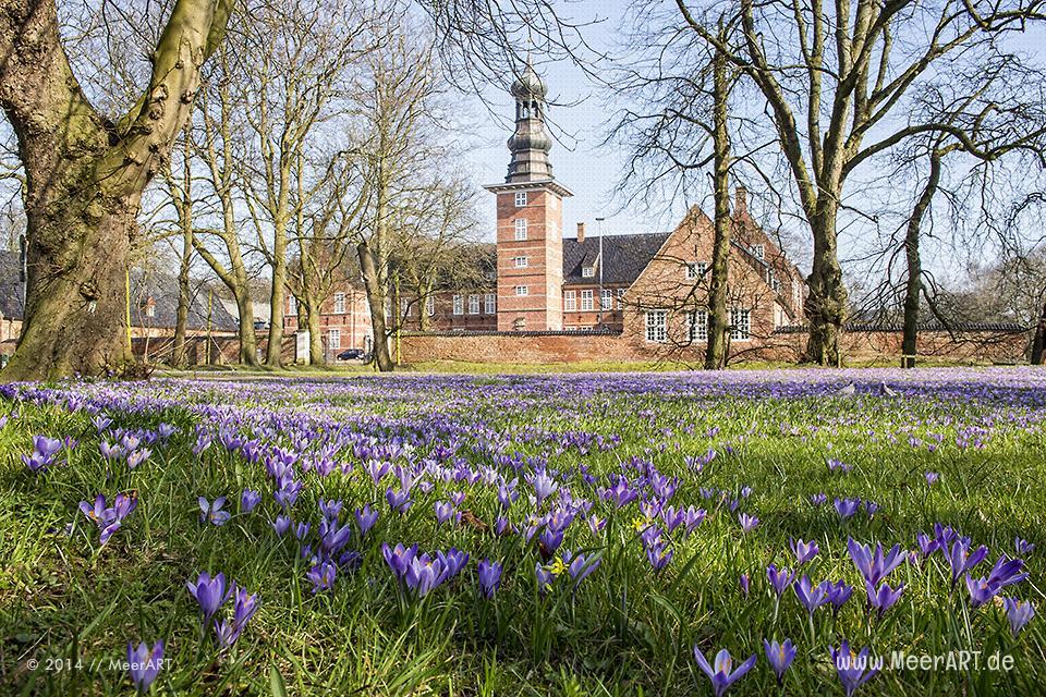 Die alljährliche Krokusblüte im Schlosspark von Husum // Foto: MeerART
