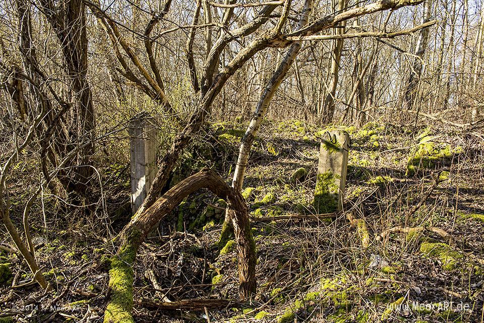Naturschutzgebiet im ehemaligen Grenzgebiet auf dem Priwall bei Travemünde // Foto: MeerART