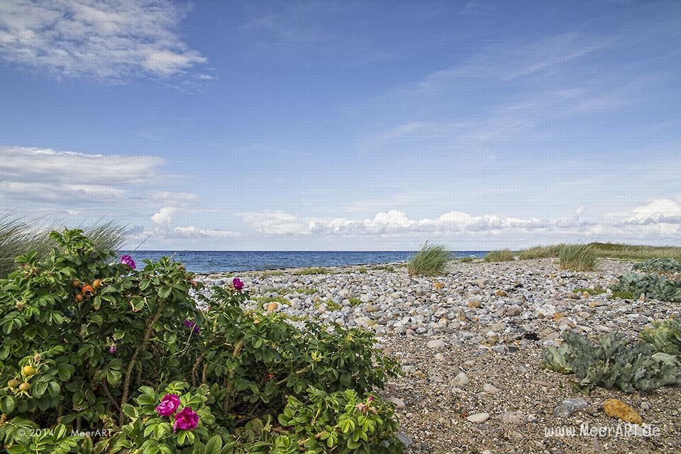 Impressionen aus dem Naturschutzgebiet Westermarkelsdorf auf der Ostseeinsel Fehmarn // Foto: MeerART