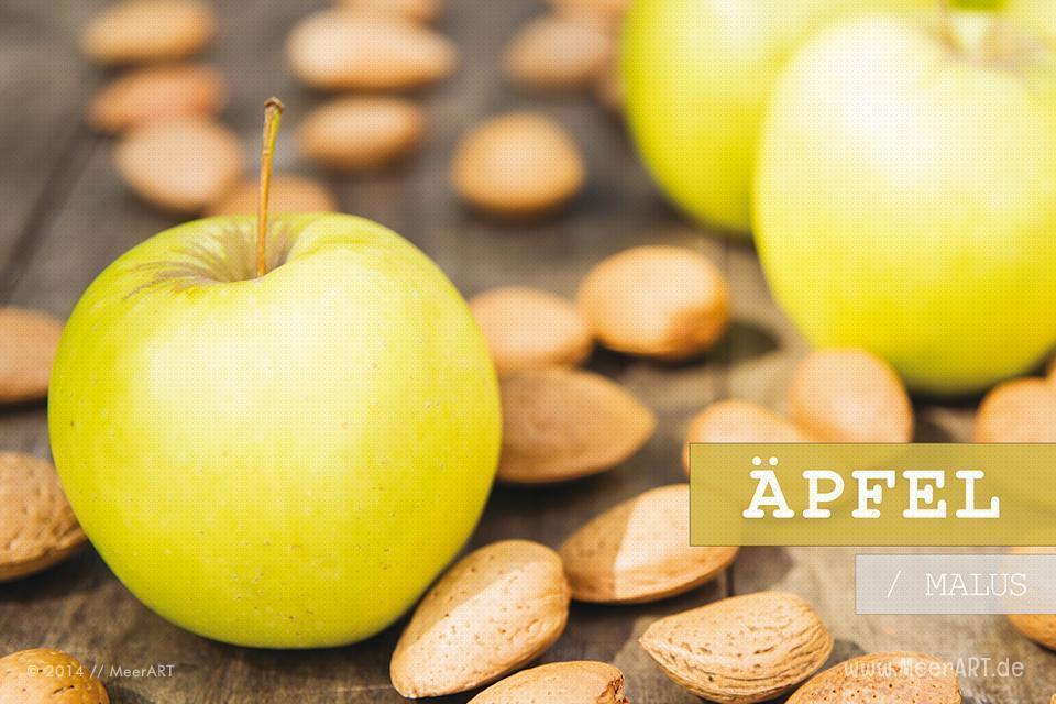 "Der Kalender ""Apfel/Malus"" // Foto: R. Kerpa"