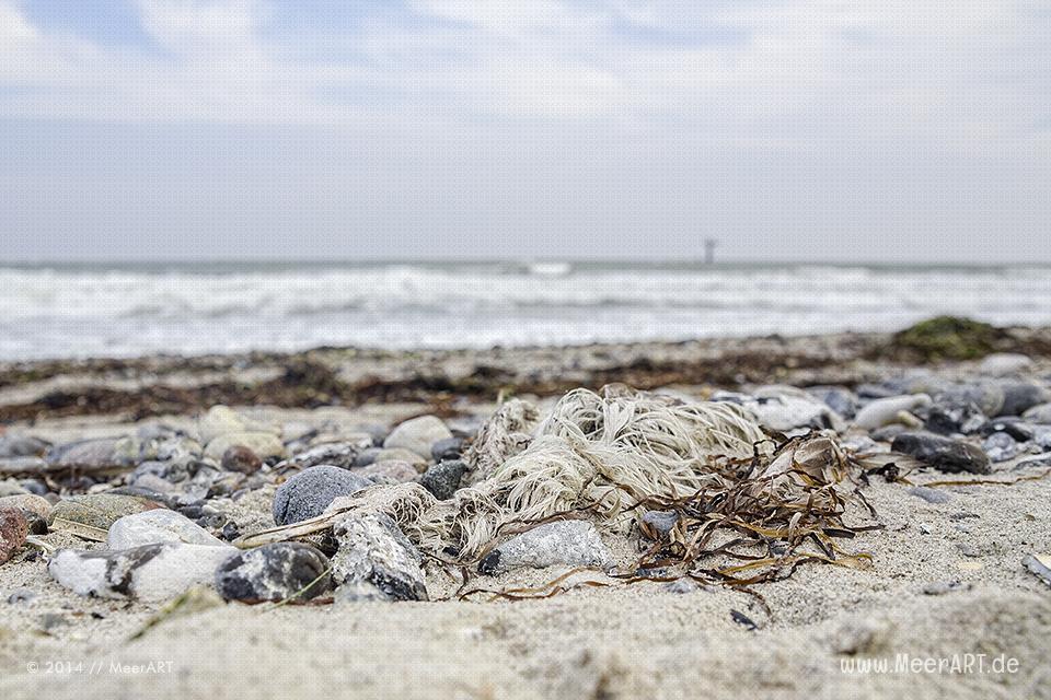Eine verendete Möwe am Ostseestrand in Marienleuchte auf Fehmarn // Foto: MeerART