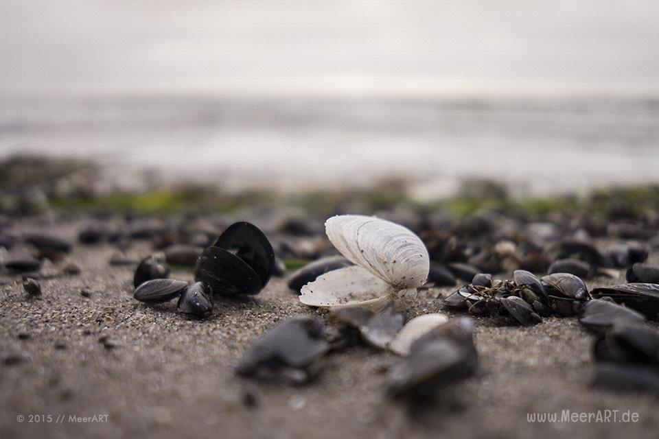 Einmal vom Südstrand nach Staberhuk und zurück // Foto: MeerART