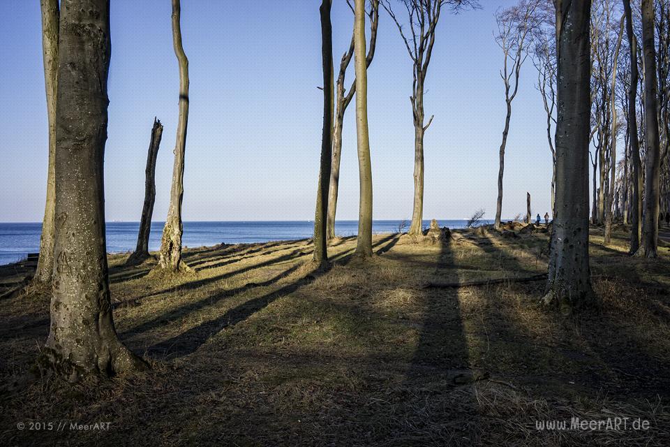 Impressionen vom idyllischen Strand und den Geisterwald in Nienhagen // Foto: MeerART