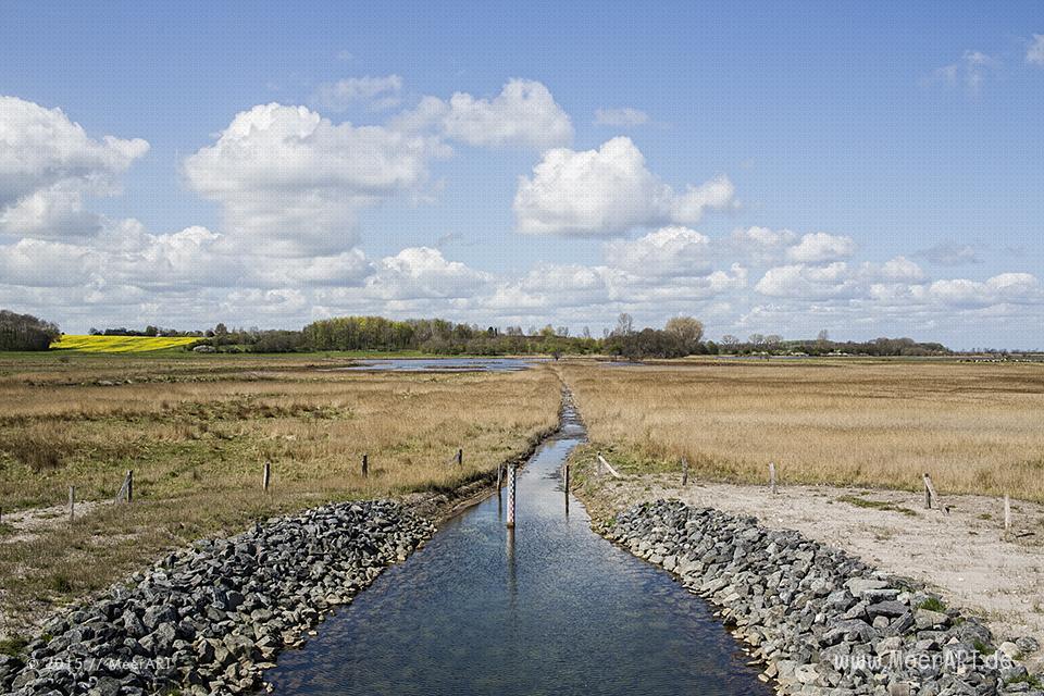 """Impressionen aus dem Naturschutzgebiet """"Geltinger Birk"""" // Foto: MeerART"""