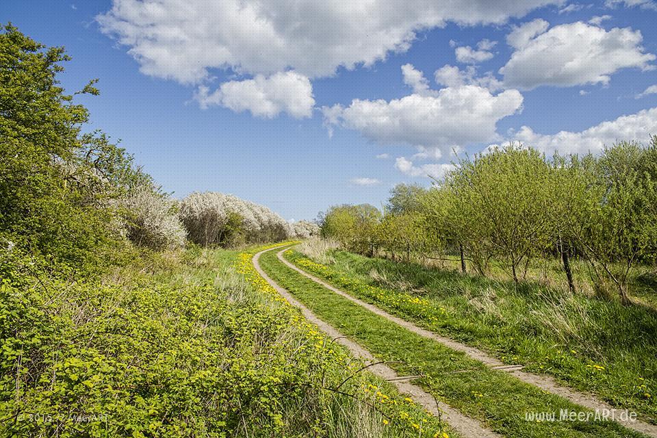 """Impressionen aus dem Naturschutzgebiet """"Geltinger Birk"""" // Foto: MeerART / Ralph Kerpa"""