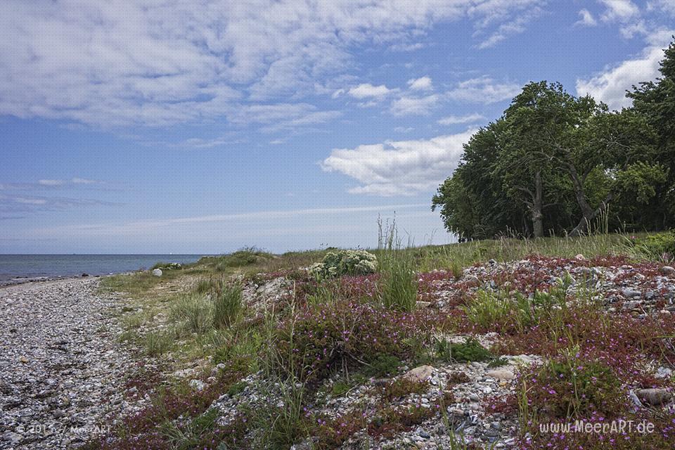Impressionen aus Kronsgaard in Angeln // Foto: MeerART