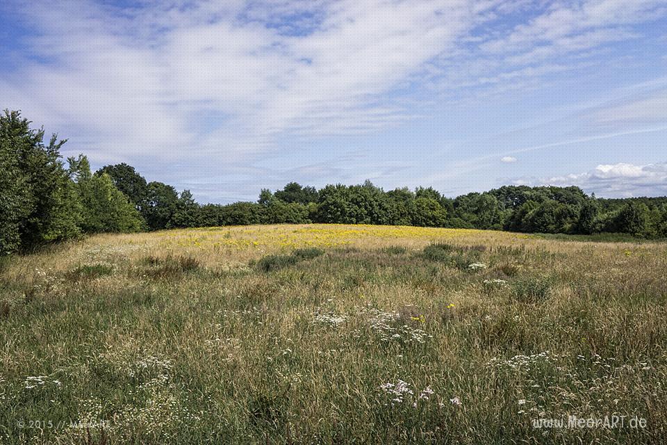 """Impressionen aus dem Naturschutzgebiet """"Dummersdorfer Ufer"""" an der Trave // Foto: MeerART"""