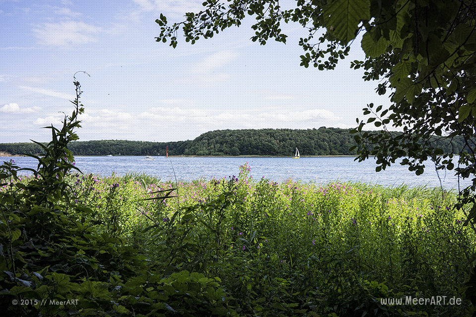 """Impressionen aus dem Naturschutzgebiet """"Dummerdorfer Ufer"""" an der Trave // Foto: MeerART"""
