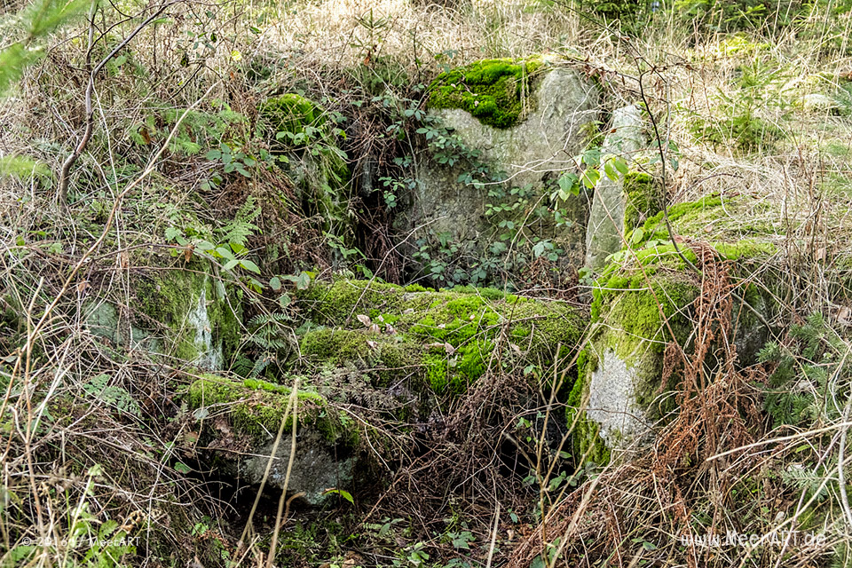 Archaeologische-naturkundliche Wanderung mit Dr. Katrin Staude // Foto: MeerART