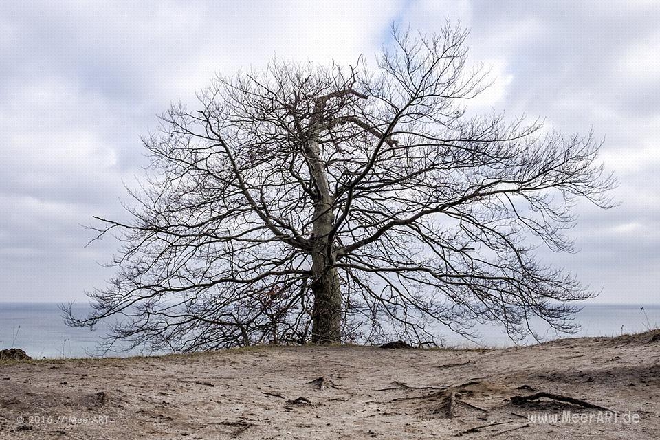 Die Kreidekueste im Nationalpark Jasmund // Foto: MeerART