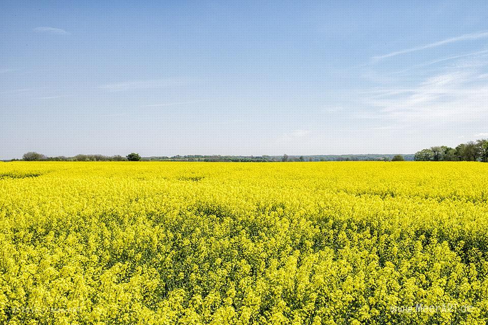 Frühlingsimpressionen von der Schlei // Foto: MeerART