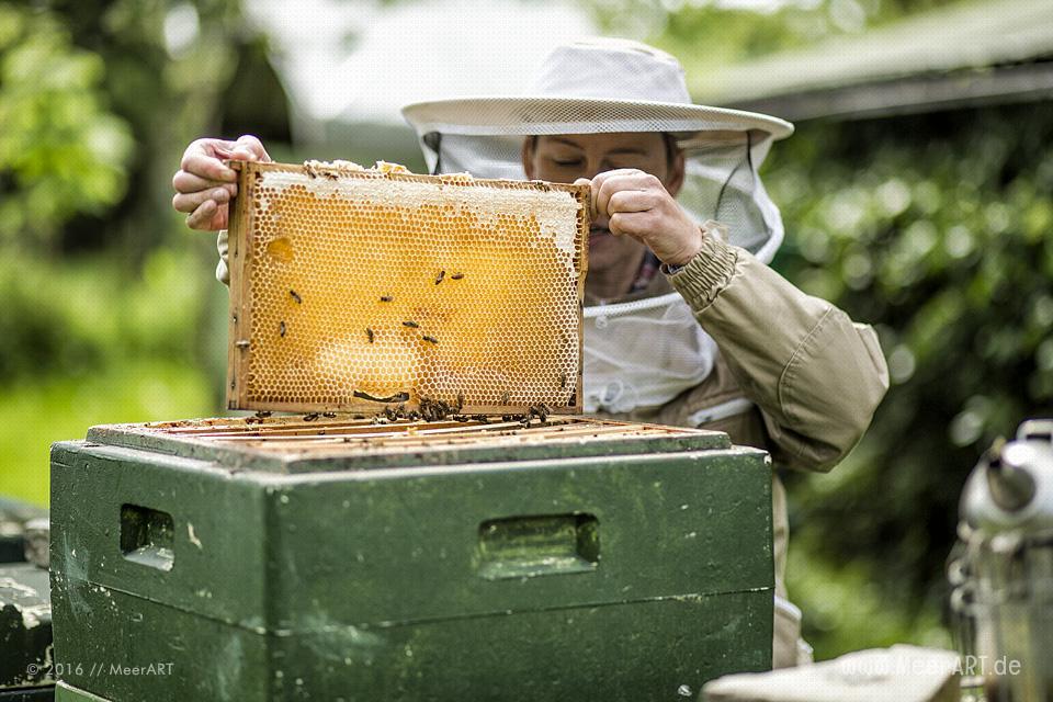 Reportage über die Honigmanufaktur Flügelchen von Agnes Flügel // Foto: R. Kerpa