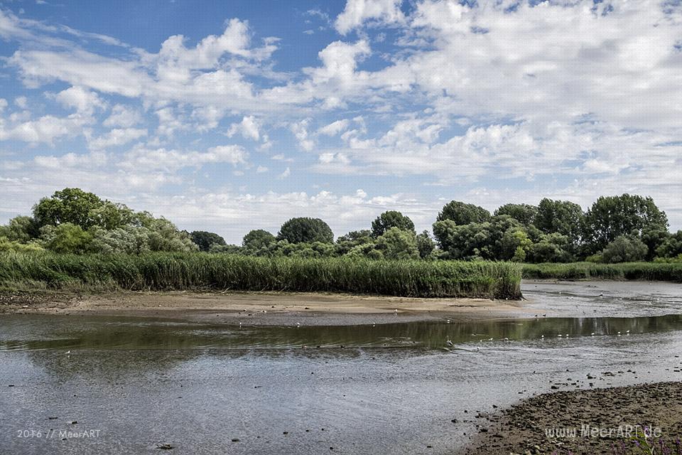 Impressionen von der Elbe bei dem Naturschutzgebiet Schweenssand // Foto: MeerART