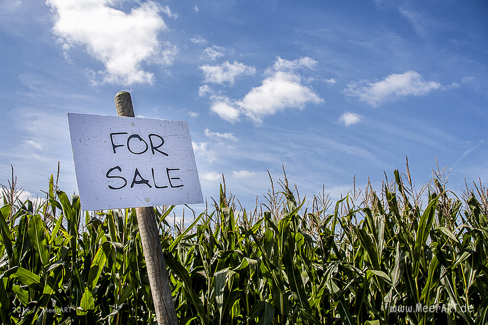 Symbolbild - Maisfeld zu verkaufen - Spekulation mit Lebensmitteln // Foto: MeerART / R.Kerpa