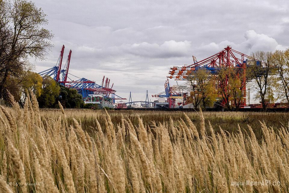 Herbstimpressionen vom Bubendey-Ufer im Hamburger Hafen // Foto: MeerART