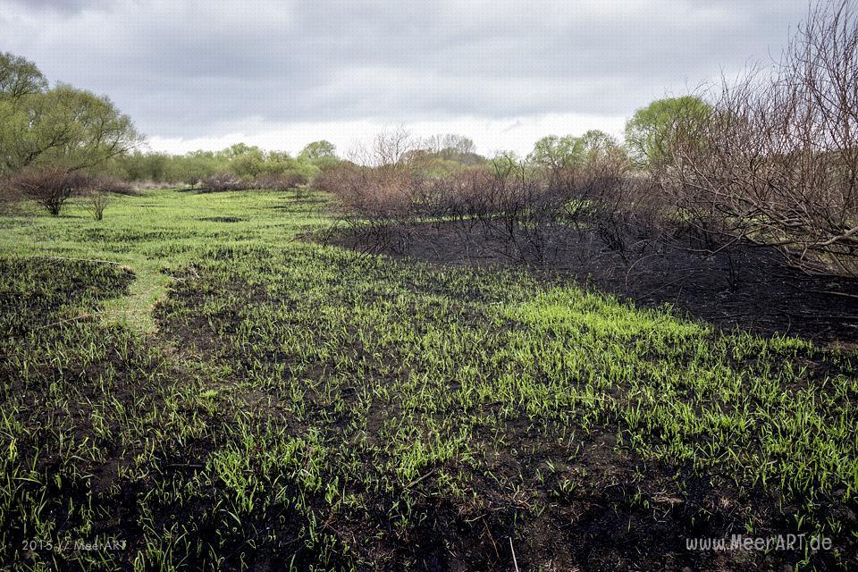 Teile der Elbinsel in Geesthacht nach einem Brand 2015 // Foto: MeerART