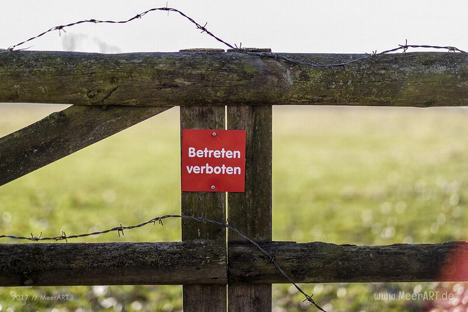 Weiderflächen für Galloway-Rinder auf der Elbinsel bei GeesWeiderflächen für Galloway-Rinder auf der Elbinsel bei Geesthacht // Foto: MeerARTthacht // Foto: MeerART