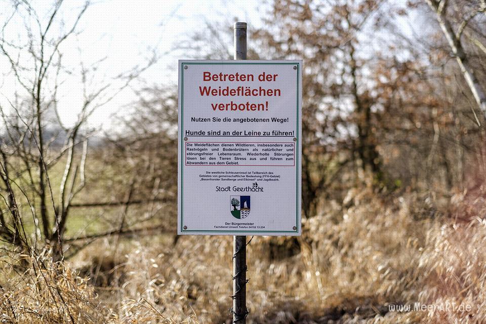 Weiderflächen für Galloway-Rinder auf der Elbinsel bei Geesthacht // Foto: MeerART