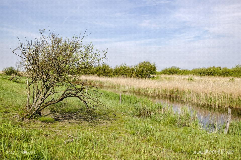 Das Naturschutzgebiet Beltringharder Koog iDas Naturschutzgebiet Beltringharder Koog in Nordfriesland // Foto: MeerARTn Nordfriesland // Foto: MeerART