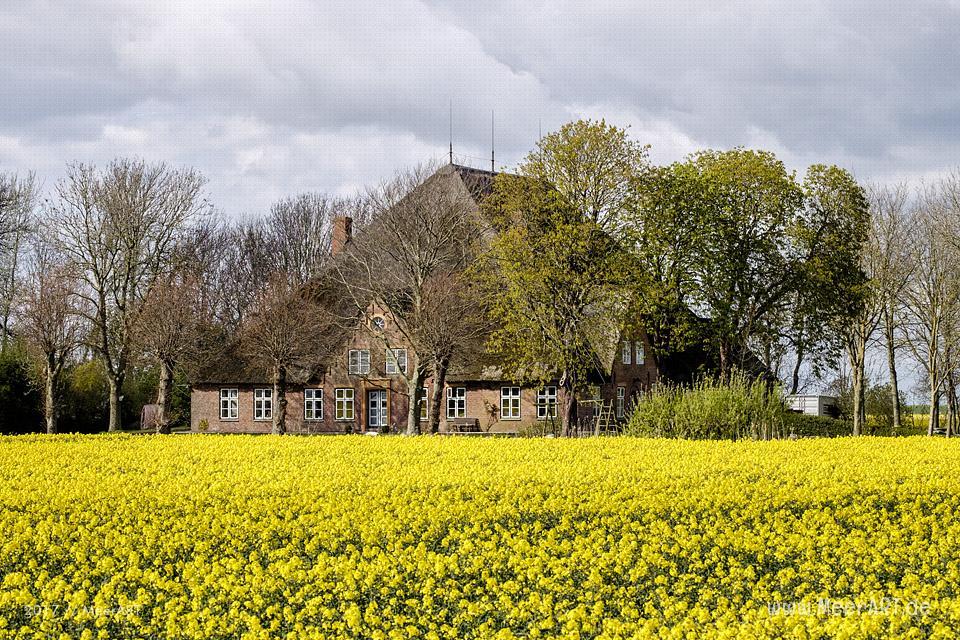Haubarg Marienhof bei Warmhörn auf Eiderstedt // Foto: MeerART
