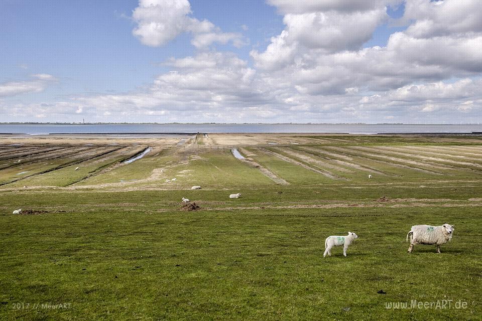 Impressionen aus Simonsberg in der Husumer Bucht // Foto: MeerART