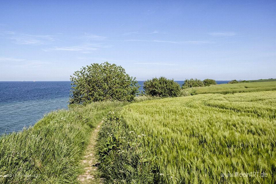 Schwedeneck auf der Halbinsel Dänischer Wohld // Foto: MeerART