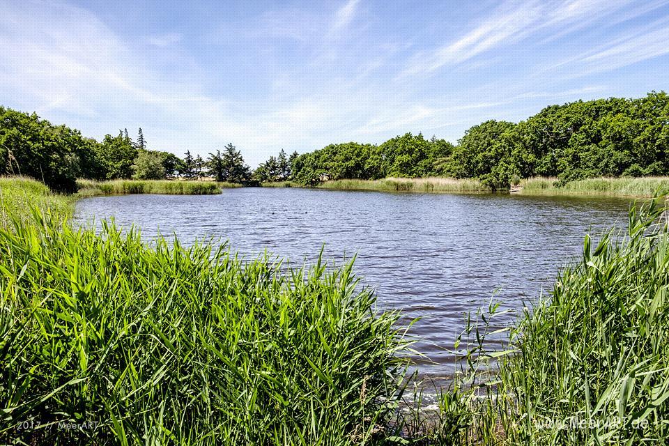 Das künstlich angelegte NABU Wasservogelreservat Wallnau im Westen der Ostseeinsel Fehmarn // Foto: MeerART