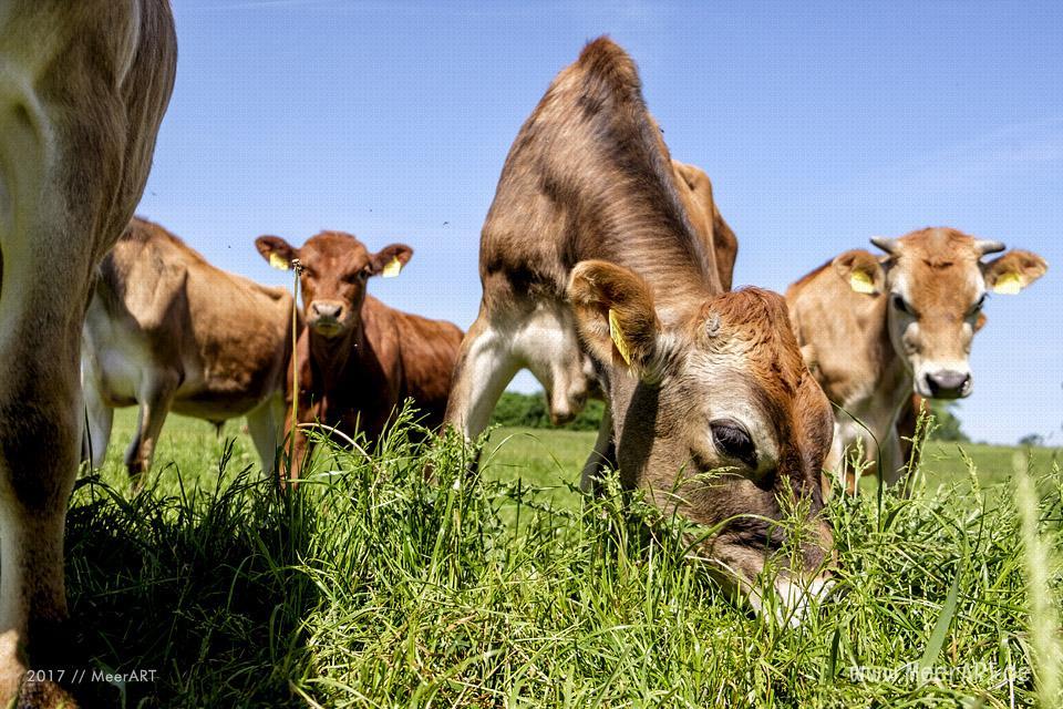 Der Rinderhof von Maya und Jens Seyer in Osdorf nahe der Ostsee im idyllischen Dänischen Wohld // Foto: MeerART