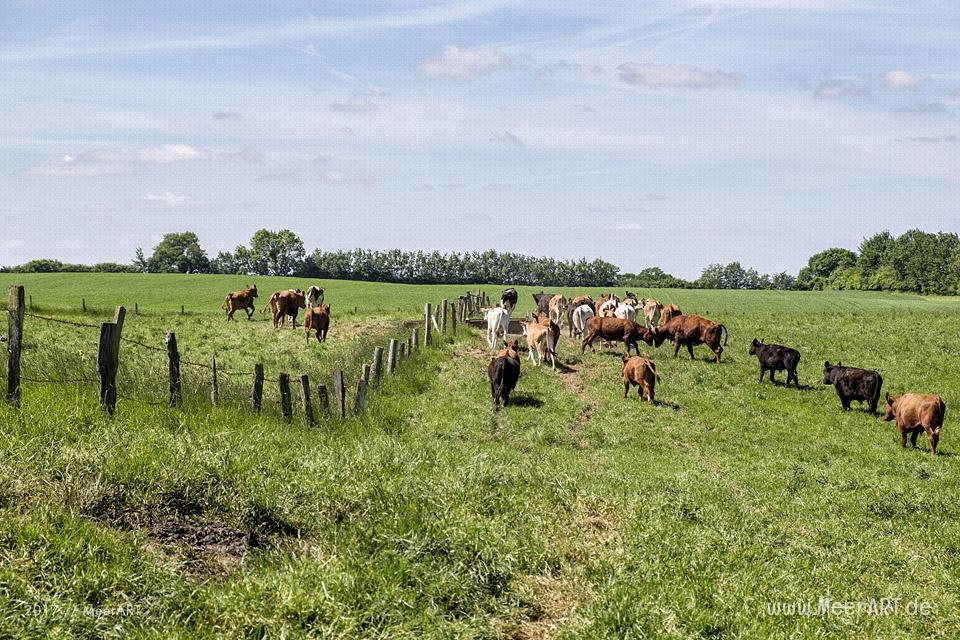 Der Rinderhof von Maya und Jens Seyer in Osdorf nahe der Ostsee im idyllischen Dänischen Wohld