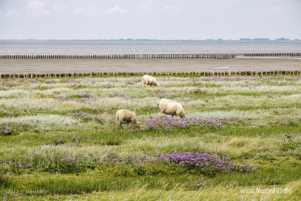 Ausflug zur Hamburger Hallig an der Westküste in Nordfriesland // Foto: MeerART / Ralph Kerpa