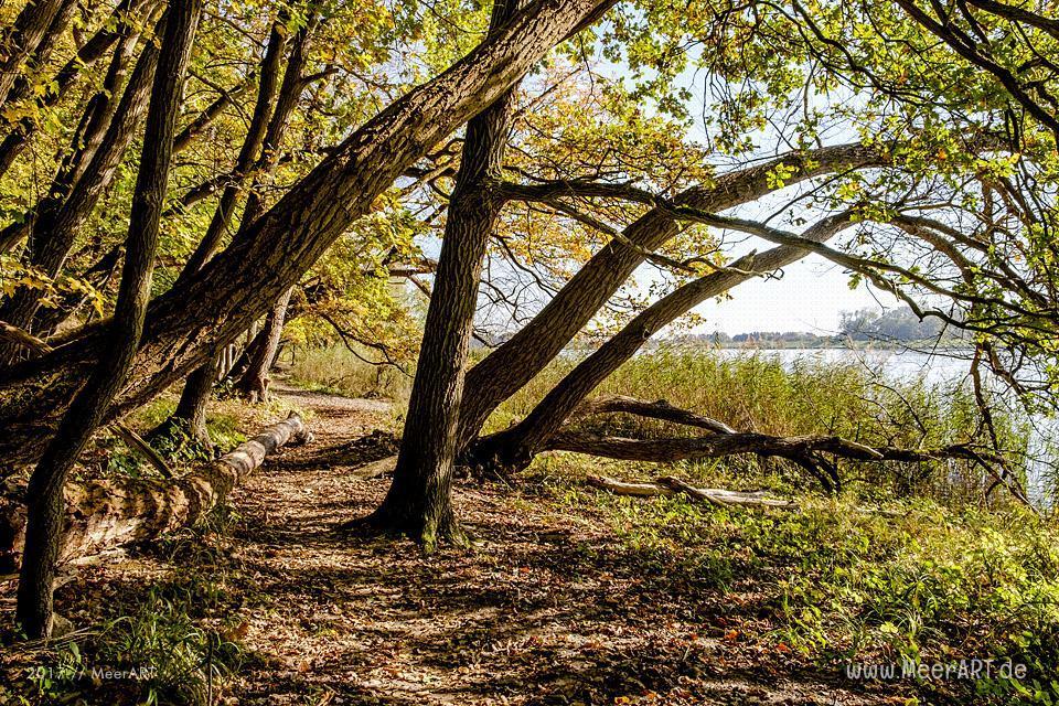 Naturschutzgebiet am HOHEN ELBUFER zwischen Tesperhude und Lauenburg // Foto: Ralph Kerpa