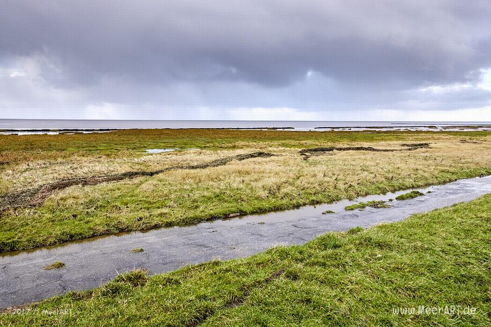 Rickelsbüller Koog - Schleswig-Holsteins nördlichster Koog an der Nordwestküste // Foto: Ralph Kerpa