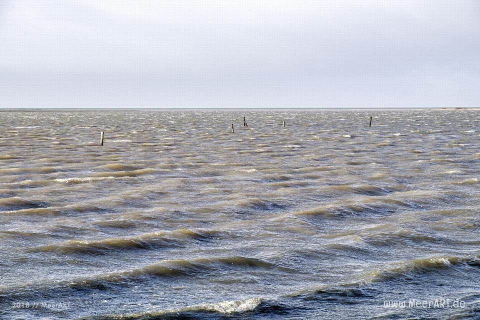 Das Naturschutzgebiet Beltringharder Koog in Nordfriesland // Foto: Ralph Kerpa