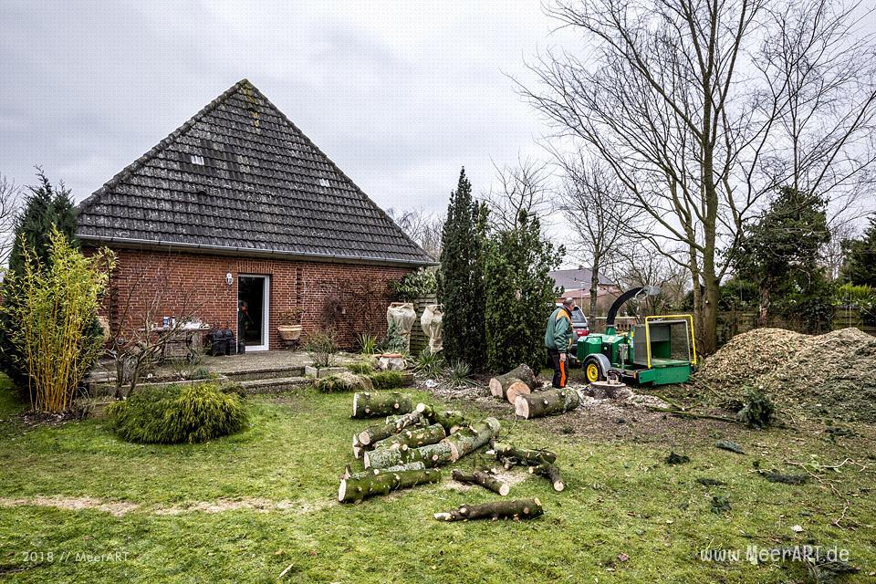 Baumfällarbeiten in Garten // Foto: MeerART